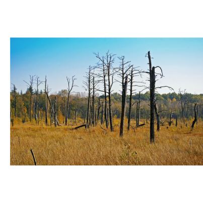 dead trees - LI post